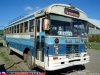 Blue Bird - M. Benz  /  Bus Rural Lumaco